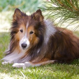 sneezing in dogs get Homeopathic Remedies For Dogs