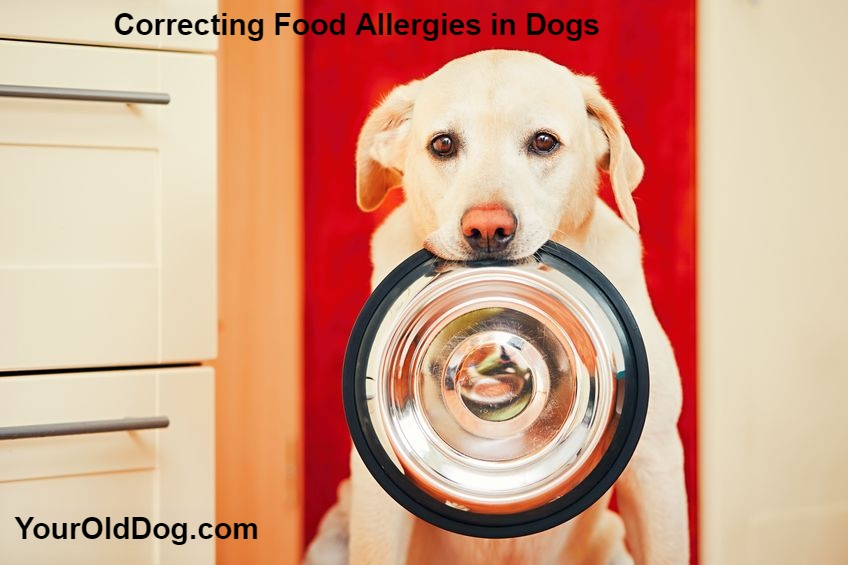 correcting food allergies in dogs