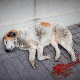 Adverse Reactions of Medicine Prescribed for Dogs