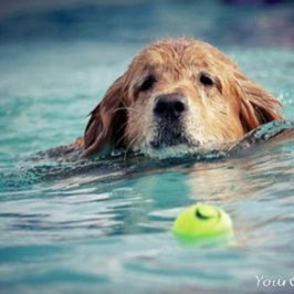 All Dogs Can't Swim or At Least Aren't Good Swimmers