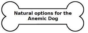 dog bone image on article about anemia