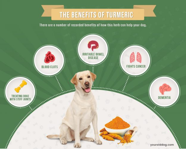 using tumeric for dogs