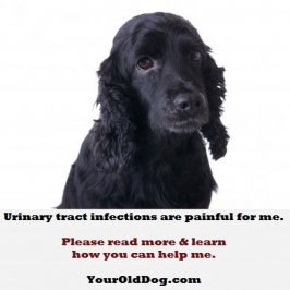 urinary tract infections dogs