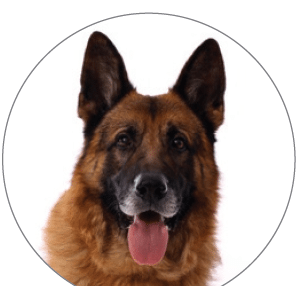 image for article on fish oils for dogs