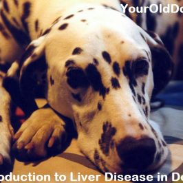 understanding liver disease in dogs