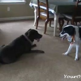 Do Certain Dogs Seem To Like Their Own Breed Best