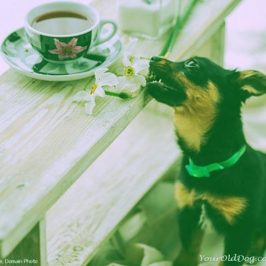 Does Green Tea Fight Cancer in Dogs?