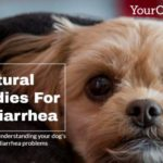 dog diarrhea natural remedies