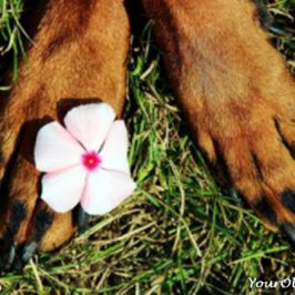 Dog Paws - Smart Tips for Care And Protection
