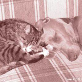 dogs-vs-cats-retro