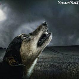 Exploring Four Dog Barking Triggers