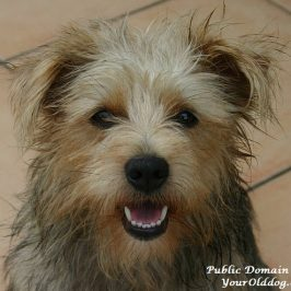 natural dog toothpaste recipe