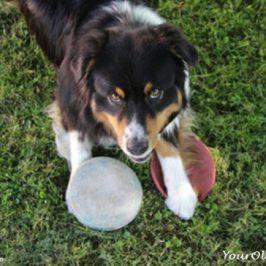 Games For Older Dogs