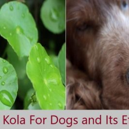 Gotu Kola for Dogs and It's Benefits