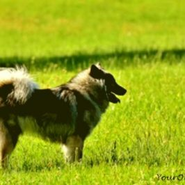 hearing-loss-in-older-dogs-the-basics-everglow