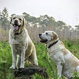 hearing-loss-in-older-dogs-treatment-and-the-path-forward-concentrate