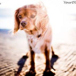 Helpful Guide for Heatstroke Symptoms in Dogs