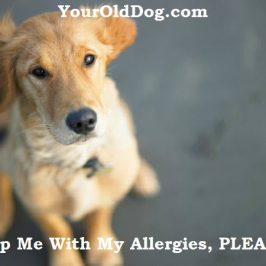 Old Dog's Allergies