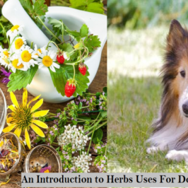 Using Herbs for Dogs – Complete Guide with Dosage