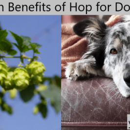 Hop for Dogs