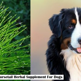 Horsetail Herbal Supplement For Dogs