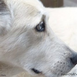 How To Help Grieving Dogs