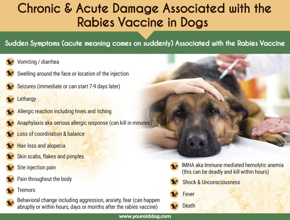 dog rabies vaccine damage