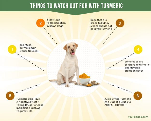 precautions of turmeric for dogs