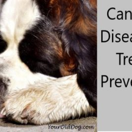 Helpful Advice for Naturally Treating Dogs With Kidney Disease