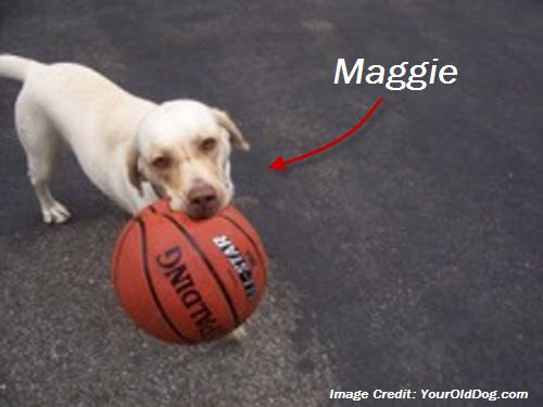 Our dog Maggie with her basketball