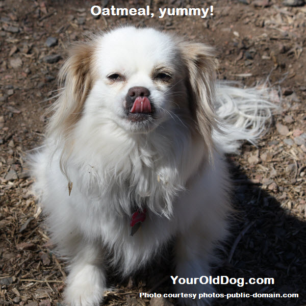 using oats and oatmeal for dogs