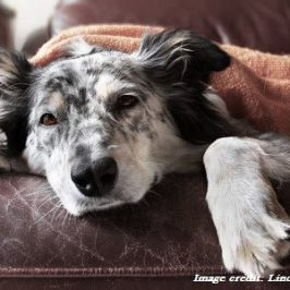 image of dog for article on inflammation