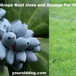 oregon-grape-for-dogs