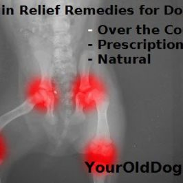 variety of pain relief remedies for dogs image