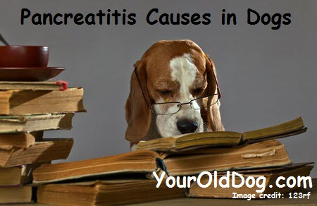 pancreatitis causes in dogs