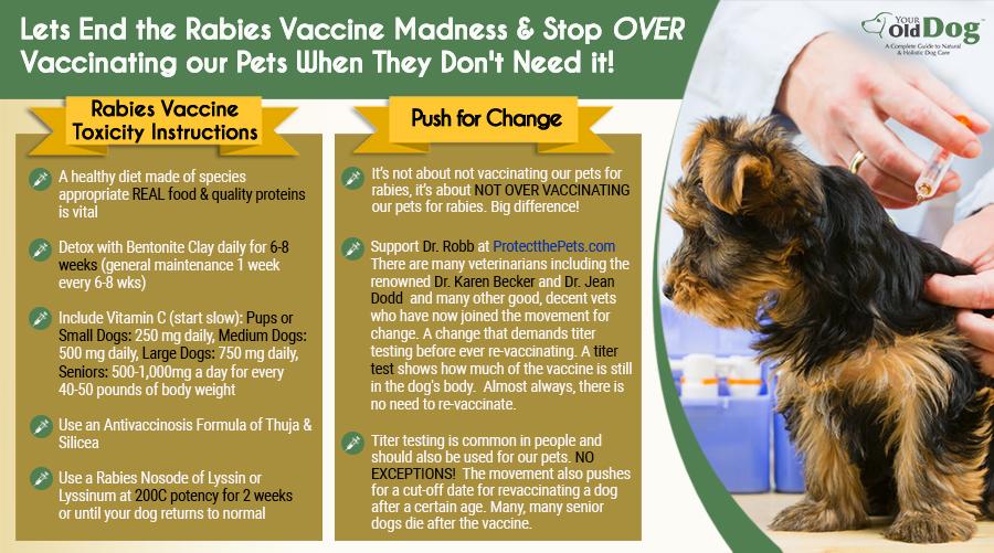 dog rabies vaccine rear end paralysis help