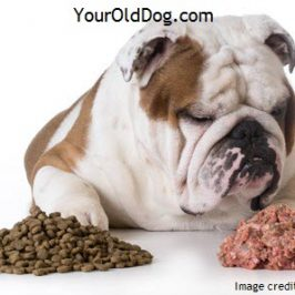 Is a Raw Diet Safe for Sick and/or Older Dogs?