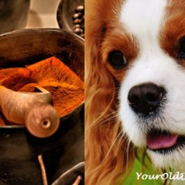 cayenne pepper for dogs