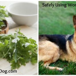 Using Wormwood for Dogs