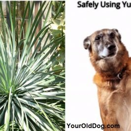 Yucca For Dogs and How To Safely Use It