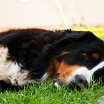 sleepy dog relaxed