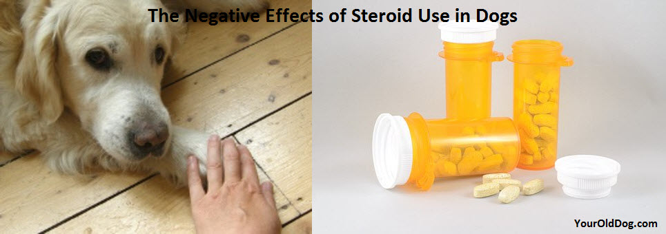 harmful effects of steroids in dogs