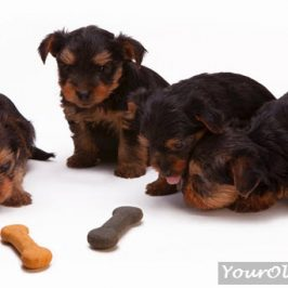 Dogs and Sugar: Why You Should Avoid It