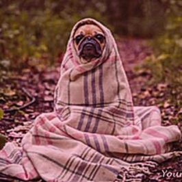 the-canine-flu-what-you-need-to-know-rain