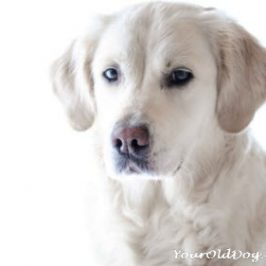 Dogs with Eating Disorders