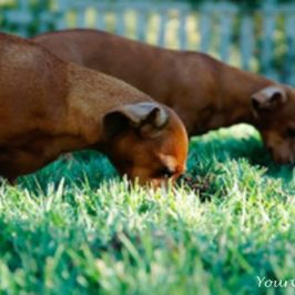 Theories Behind Why Dogs Eat Grass