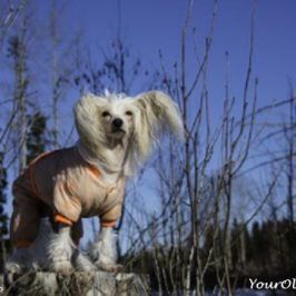 Thundershirt Product Review - If You Don't Read My Review Now, You'll Wish You Did Later!