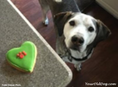 treat recipes for dogs