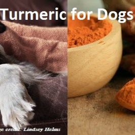 Safely Using Turmeric for Dogs
