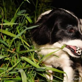 Vegan Diets for Dogs: Biggest Reasons To Avoid